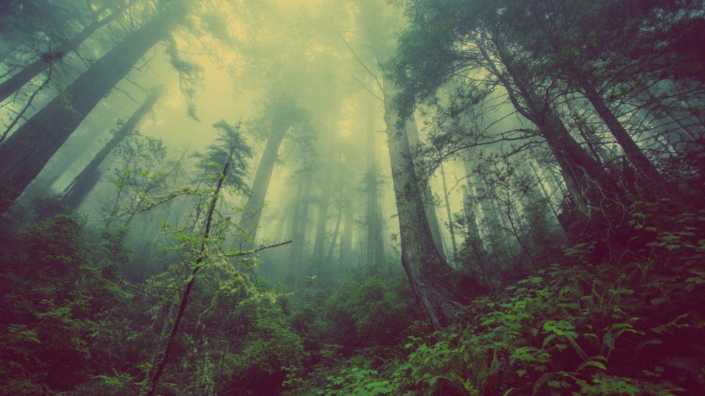 direction de vie perdu en forêt
